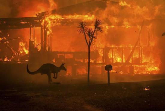澳大利末日山火,烧6个州,24人死亡,4.8亿动物