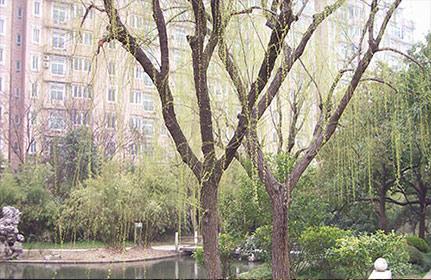 水景施工在园林景观施工中的意义、应用方案