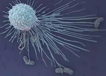 """巨噬细胞内含炎症""""刹车""""蛋白,能减轻慢性炎症反应对机体的损伤"""
