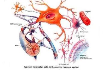 神经干细胞再生机制揭示细胞不为人知的行为