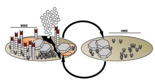 甲烷温室效应是二氧化碳的120倍,如何减少甲烷的排放