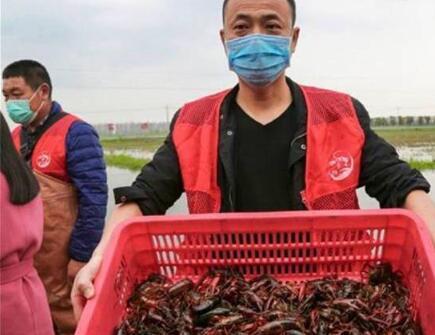湖北小龙虾日销超650吨,已销往全国360多个城市