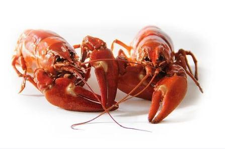 2020年武汉小龙虾价格跳水:不到10元一斤,但炮头小龙虾涨到38元至40元