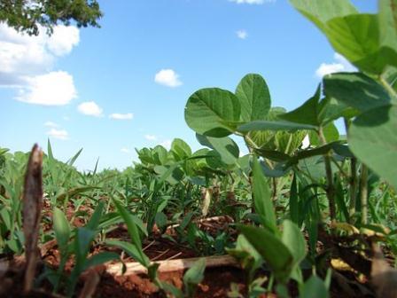 国际粮食贸易秩序或被打破,我国大豆供应仍有潜在风险