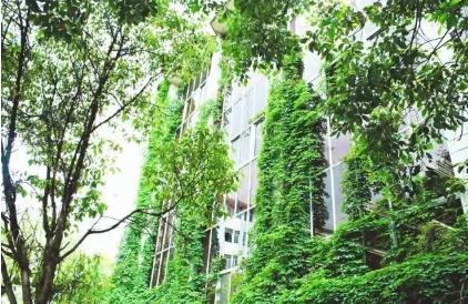 贵阳高校爬山虎占领9层图书馆,去年就已成网红