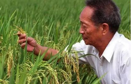 袁隆平获聘农民丰收节推广大使,还有李子柒、冯巩等人