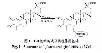 雷公藤红素纳米混悬剂常用制备方法及工艺优化