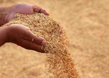 今年我国粮食自给率怎么样?中国粮食产量平稳