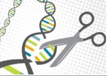 """基因""""魔剪""""技术对抗恶性肿瘤已被初步证实可行性"""