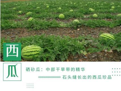 宁夏硒砂瓜什么时候上市?硒砂瓜的特点与口感、价格与挑选