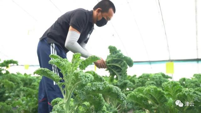 年薪20万工程师董志伟辞职种蔬菜,从赔本到逐渐步入正轨!