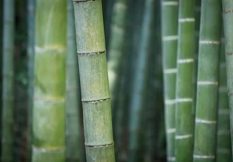 追寻竹材碳足迹,破译竹产业振兴密码