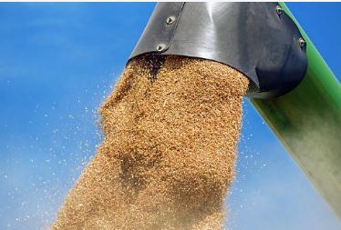 2020年小麦国家保护价是多少?小麦价格行情走势分析