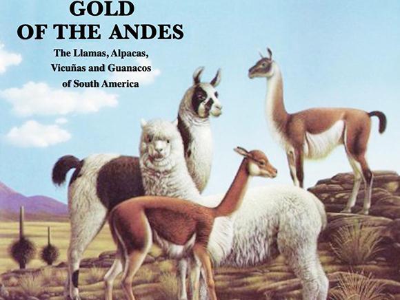 揭示羊驼和美洲驼的起源、不对称基因渐渗现象