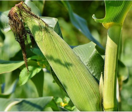 2020年重點強農惠農政策解讀