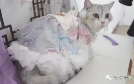 90后女孩给猫做汉服月入7万,穿汉服的猫有多漂亮