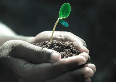 土壤中的塑料颗粒从哪里来?新研究发现植物会吸收塑料