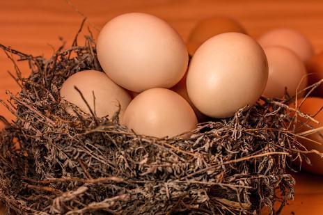雞蛋下半年的行情如何?預計2020年下半年雞蛋價格將上漲