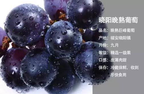 福安葡萄幾月份成熟上市?福安葡萄特別甜的原因