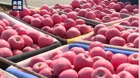 2020年苹果减产价格上涨,优质苹果不愁卖
