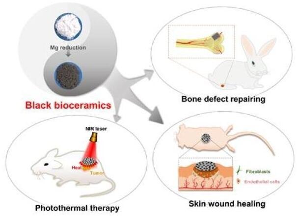 黑色生物活性陶瓷材料兼具促进多种组织再生活性及肿瘤治疗等多功能特性