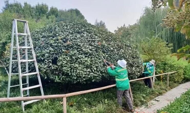 泰安开展秋季绿化养护管理工作,进一步提高绿化养护管理水平