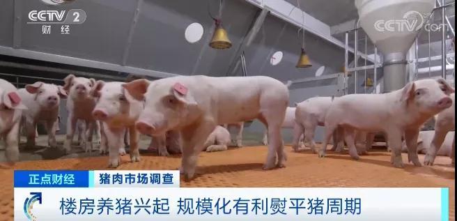 上海猪肉价格下滑说明拐点到了,楼房养猪优缺点与趋势分析