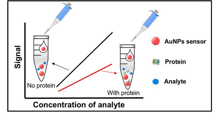 西南大學發現蛋白冠對于傳感器有著不小的影響