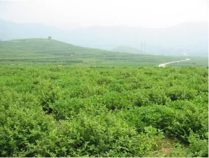 山東平邑:一個中醫藥產業發展的樣板地區
