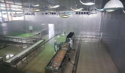 新疆赛湖渔业以科技创新为核心,不断延长高白鲑的产业链