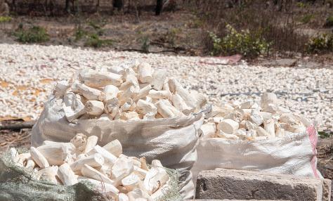 一文了解木薯营养成分、用途及在饲料中的应用趋势
