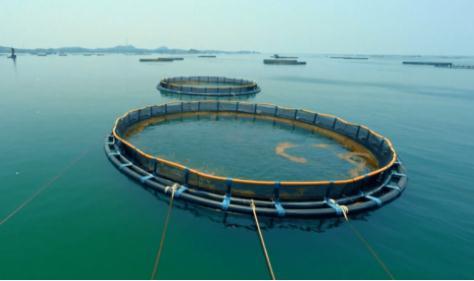 首届全国水产养殖机械化现场会,共有120余种机械设备参加