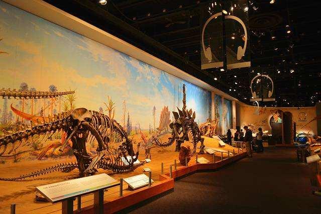 化石博物馆:坐拥世界顶级的化石资源,为何吸引不了游客