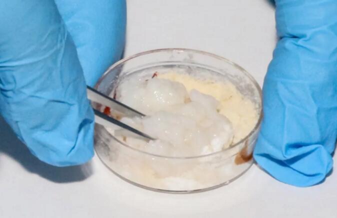 细胞培养肉公司CellX完成百万融资,3D技术培育的肉你敢吃吗