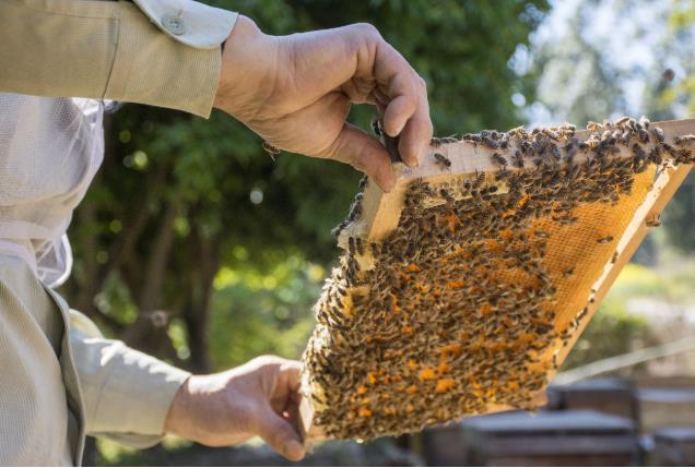 市场监管:9批次抽检不合格食品 电商平台蜂产品成为重灾区