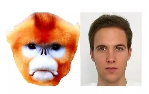 猴脸识别技术已处于实验推广阶段,秦岭金丝猴识别成功率高达94%
