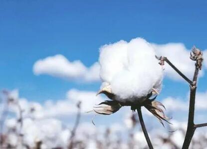 """新疆棉花牵出全球纺织服装产业链:没哪个国家能成为下一个""""中国"""",各环节占比70%"""
