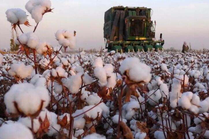 受新疆棉花影响,国内棉花期货受到一定压力