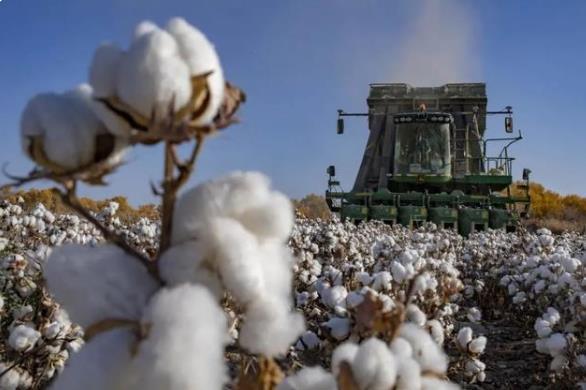不容抹黑!关于新疆棉花的6个事实!华春莹说新疆棉花这么好不用是损失