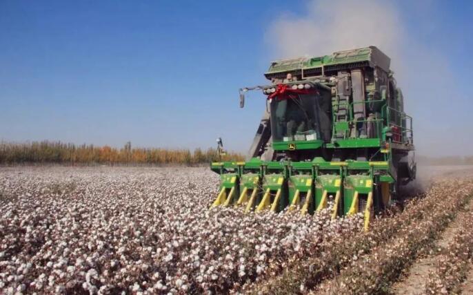 新疆棉花的厉害之处,看完你就懂了