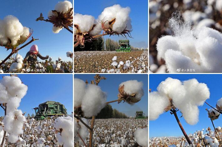 起底新疆棉采摘:北部95%机械化,中国棉花协会支持各方赴疆考察