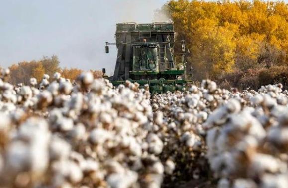 BCI总部对华强硬内幕,为什么是新疆?为什么是新疆棉花?