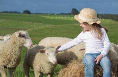 未来的千亿羊奶赛道崛起,哪一个羊奶企业会成为下一个超级单品