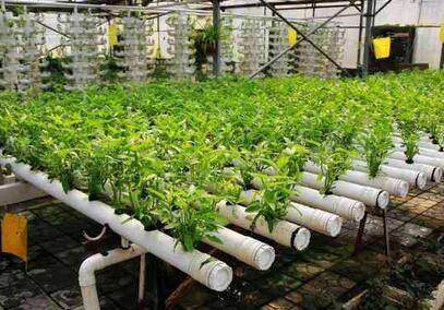 无土栽培的植物有哪些?无土栽培的优势是什么?