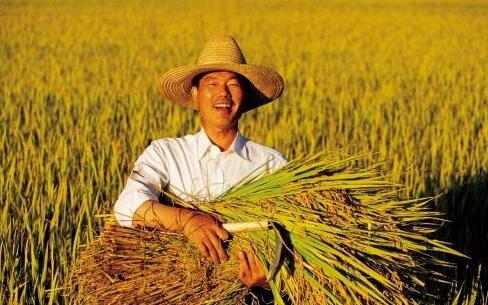 2021年农业补贴倾向于这4类人,国家补贴倾斜后农民将面临这2大问题