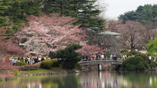 盘点15个超美的日式花园,领略不同的园林风景!