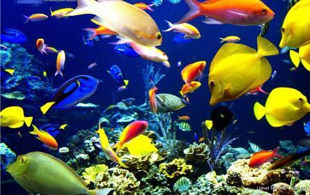 热带鱼的种类有哪些?常见小型热带鱼图片及名称