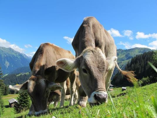"""内蒙古科尔沁打造肉牛产业""""茅台镇"""",多举措激活肉牛产业发展一盘棋"""