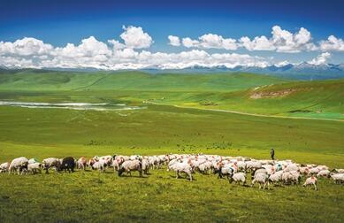 高质量绿色发展助推畜牧业实现碳达峰碳中和目标