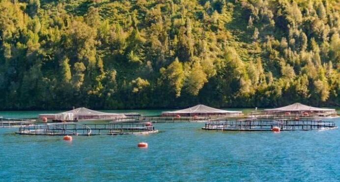 智利三文鱼养殖行业:坐拥全球顶级三文鱼养殖资源,却如履薄冰